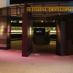Our Experience at the OMSI Prenatal Exhibit Displaying Real Preserved Children