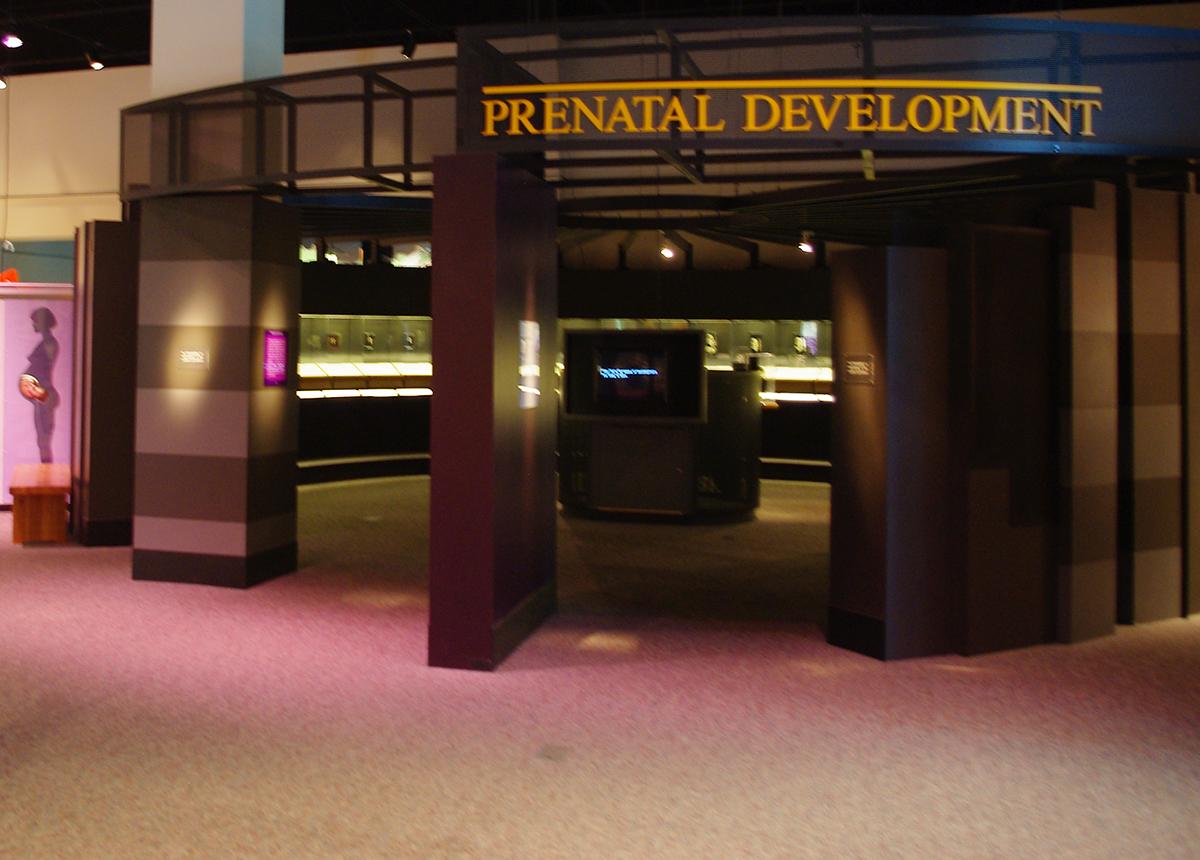 OMSI Prenatal Exhibit