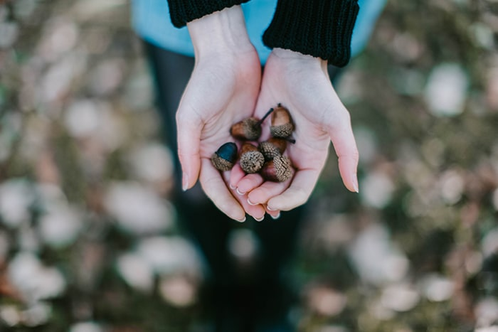 Acorns in ladies hands